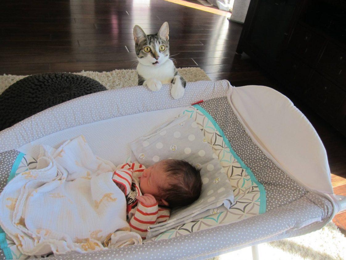 Zapomnieli powiedzieć kotu, że będą mieli dziecko. Reakcja zwierzaka jest mistrzowska
