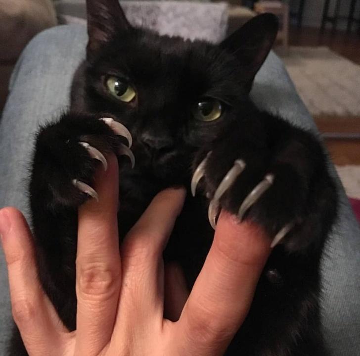 24 koty, z którymi nie chcesz zadzierać. Wystarczy spojrzeć na ich złe miny