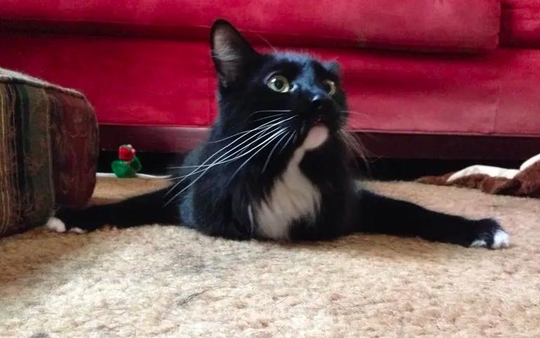 18 szczęśliwych kotów, które cały dzień czekały, aż wreszcie wrócisz do domu