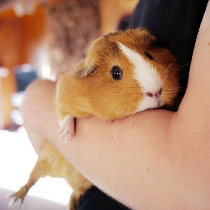 12 zwierzaków, które okażą się idealnymi przyjaciółmi, dla dzieci z alergią