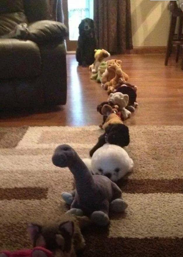Śmieszne psy