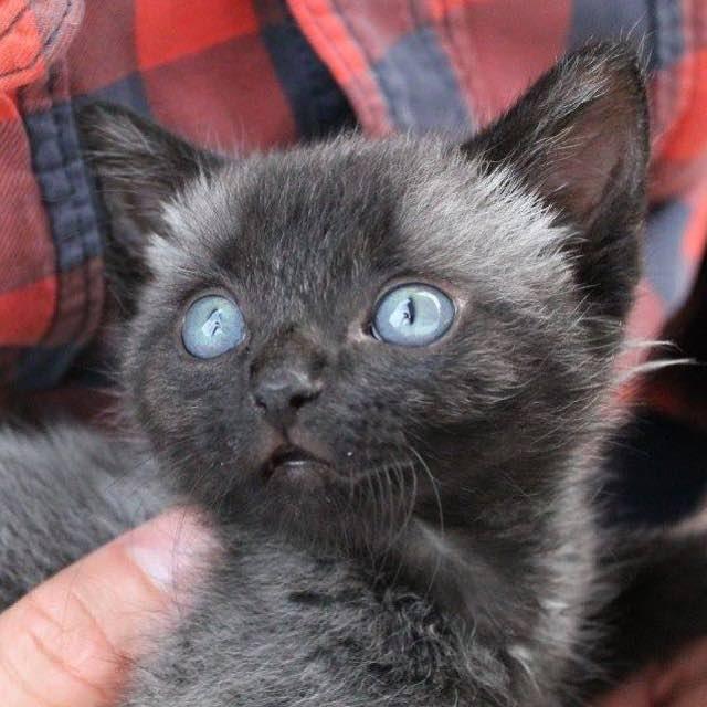 Znalazła maleńkiego kotka. Była przerażona, gdy zobaczyła, że wciąż ma przyczepioną pępowinę
