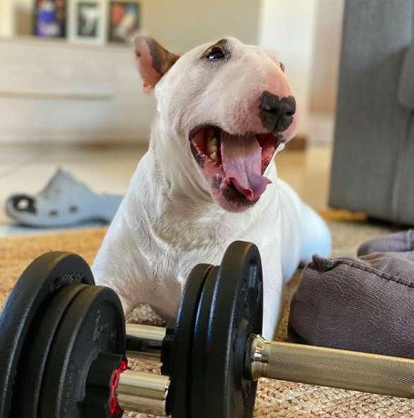 Domowe ćwiczenia z psem