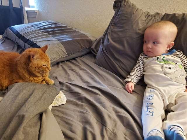 Dzięki kamerce rodzice zdali sobie sprawę, co nocą zrobił kot w pokoju ich małej córeczki