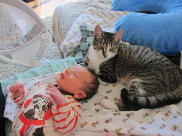 Nietypowa reakcja kota na narodziny dziecka rozbawiła ludzi z całego świata