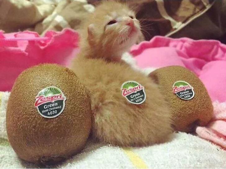 15 kotów, na widok których do głowy od razu przychodzi Ci jedzenie