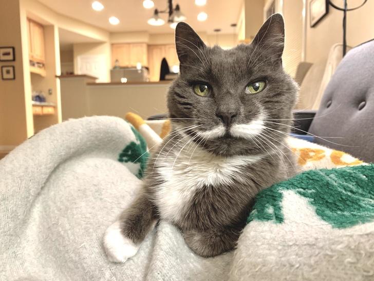 22 niezwykłe koty, które nie potrzebują Photoshopa, by wyglądać wyjątkowo