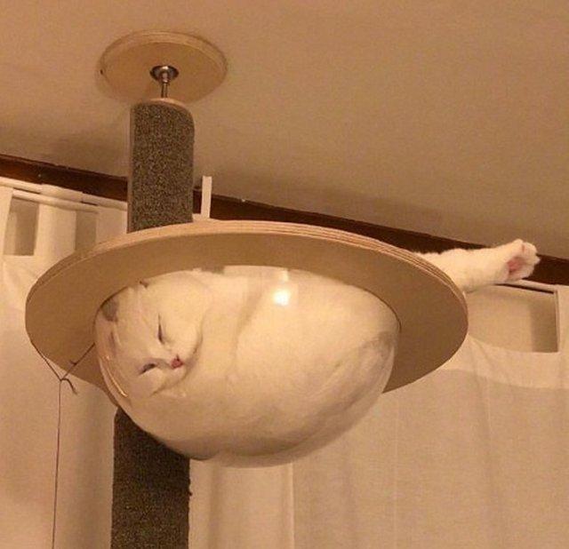 Śmieszne kształty kotów