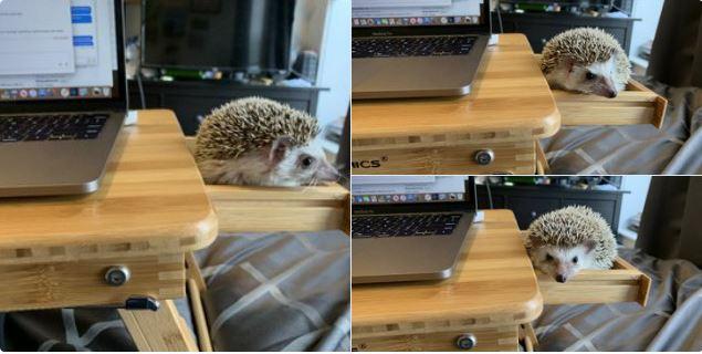 Praca zdalna ze zwierzętami
