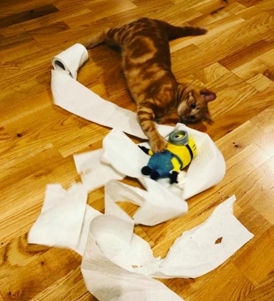 14 nikczemnych kotów, które wybrały najgorszy czas na zniszczenie papieru toaletowego