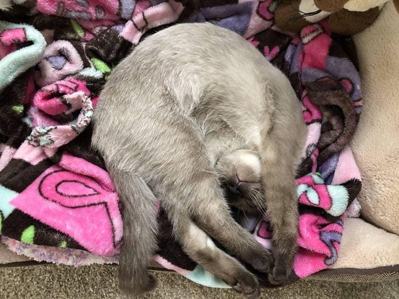 15 zdjęć, przez które można by pomyśleć, że kości kotów to tak naprawdę makaron spaghetti
