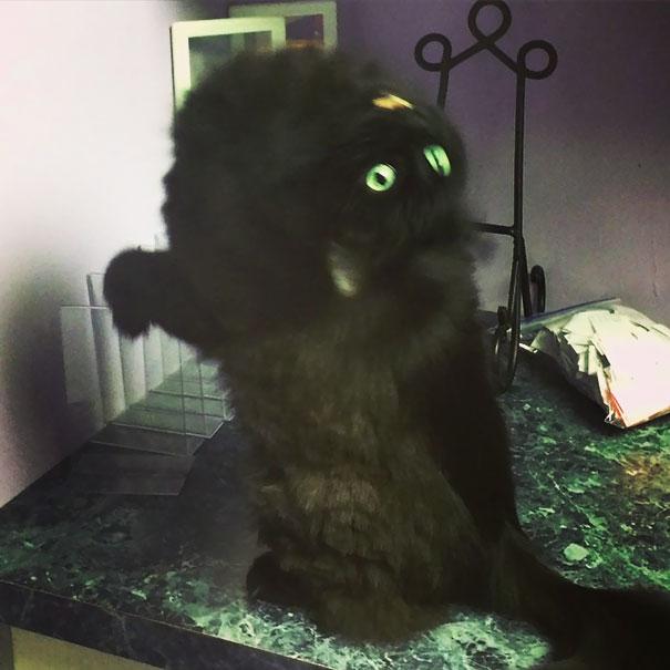30 opętanych kotów, które jak najszybciej potrzebują egzorcysty