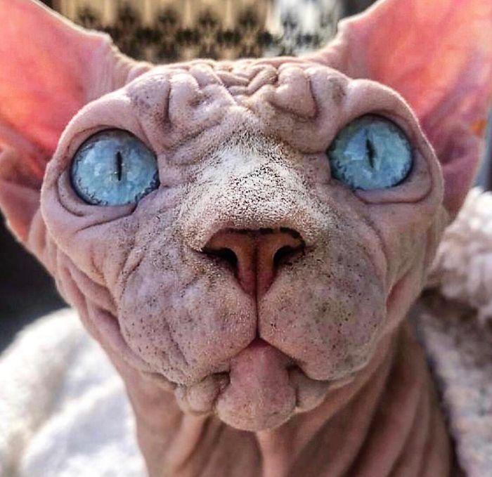Oto Xherdan – kot, którego ludzie nazywają najstraszniejszym. Odważysz się przywitać?