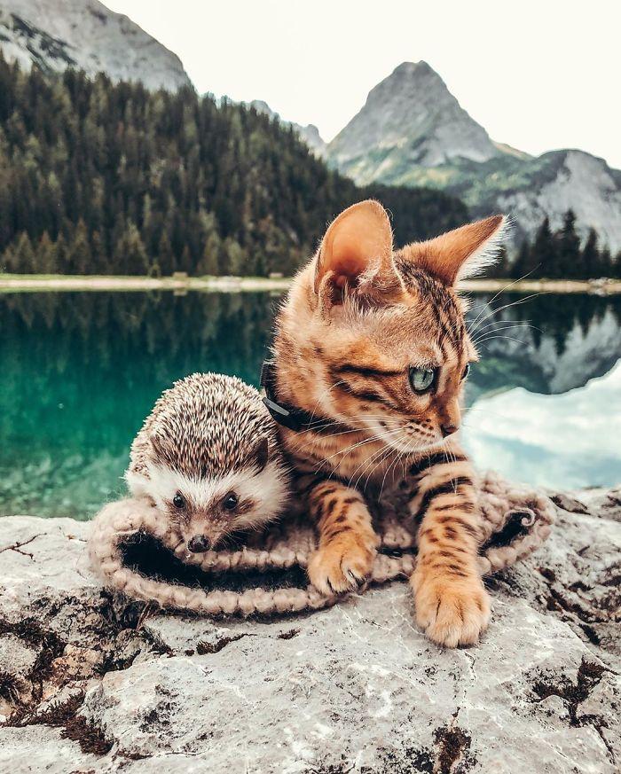 Oszaleliśmy na punkcie tej dwójki. Poznaj jeżyka Herbee i kota Audree [30 zdjęć]