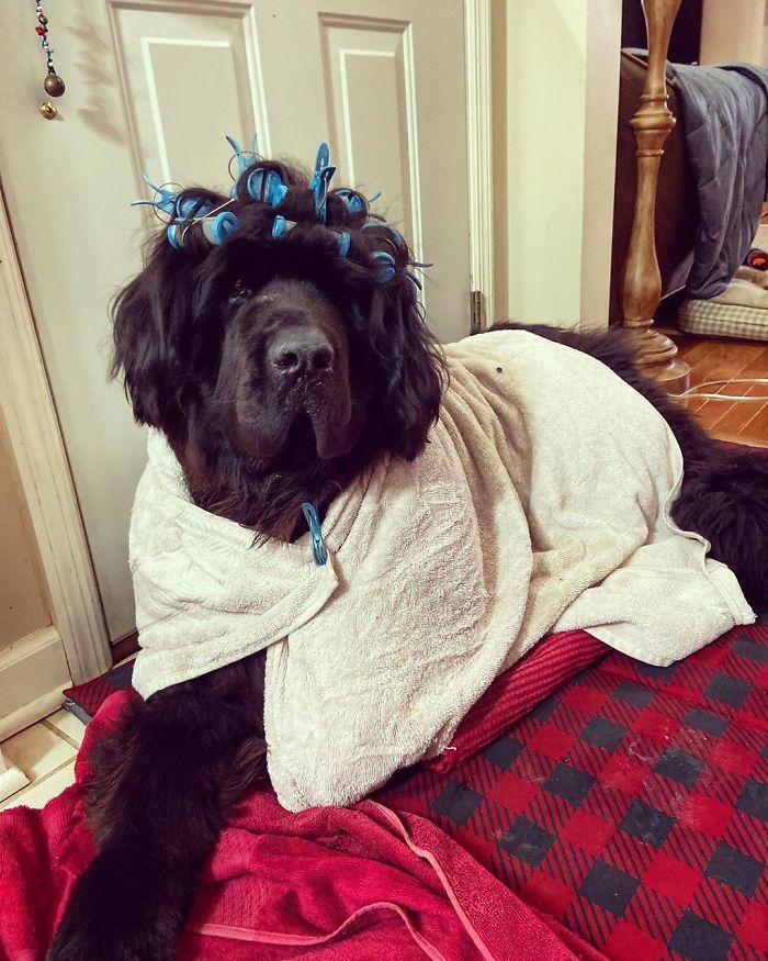 Podczas kwarantanny codziennie robi swojemu psu nową fryzurę. Efektem chwali się na Instagramie
