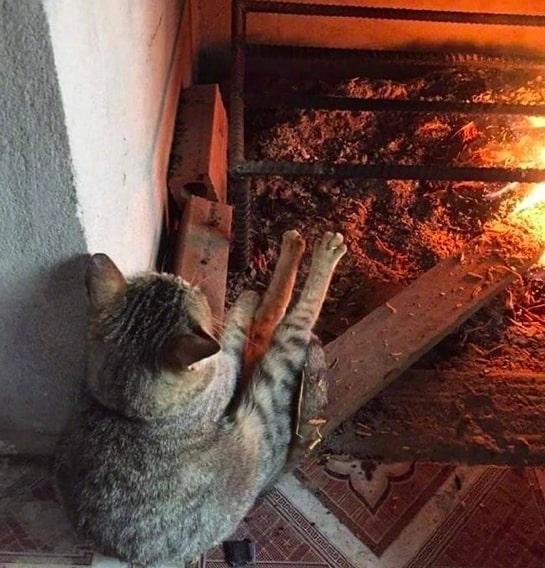 20 kotów, które są za dobre dla tego świata