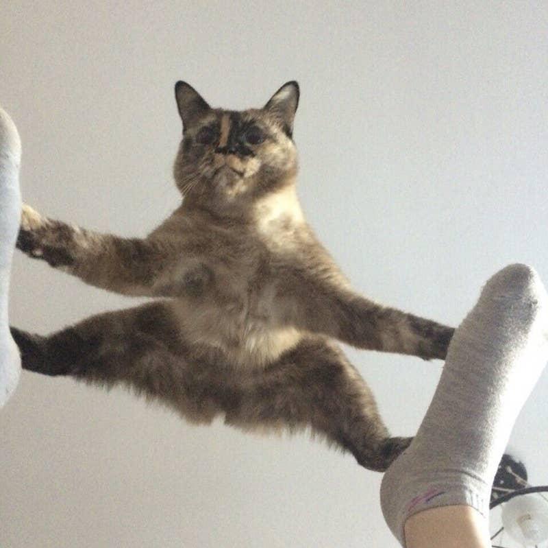 22 koty, które dokonały bardzo złych wyborów życiowych
