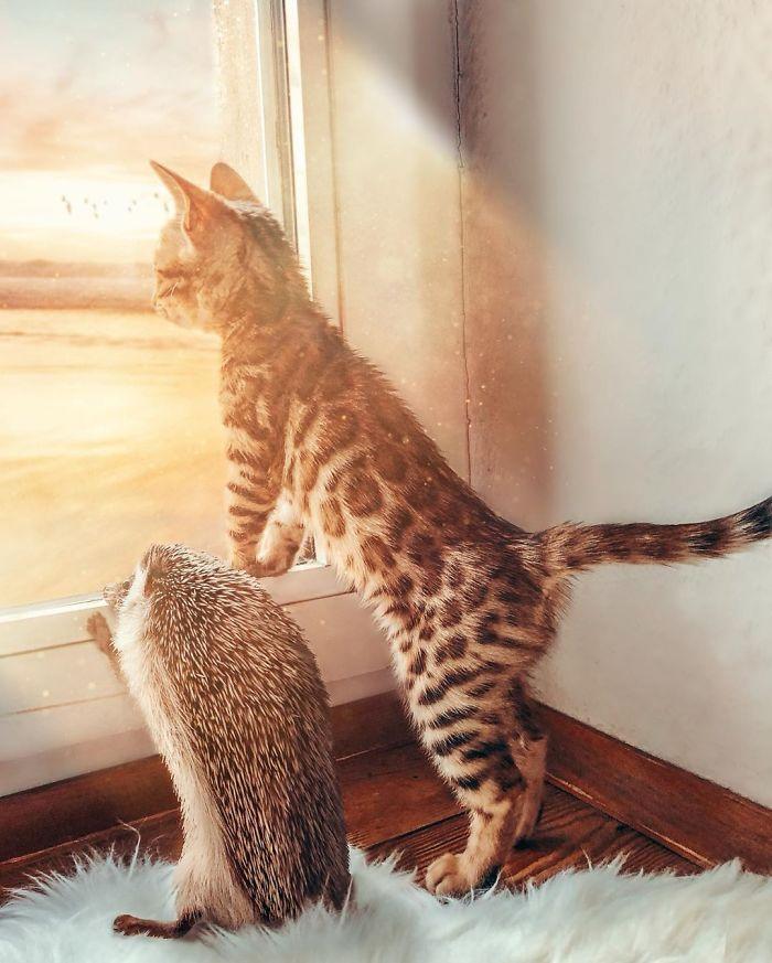 Oszaleliśmy na punkcie tej dwójki. Poznaj jeżyka Herbee i kota Audree