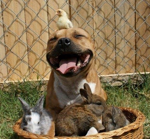 Urocze zdjęcia, które pokazują, że psy potrafią zaprzyjaźnić się dosłownie z każdym
