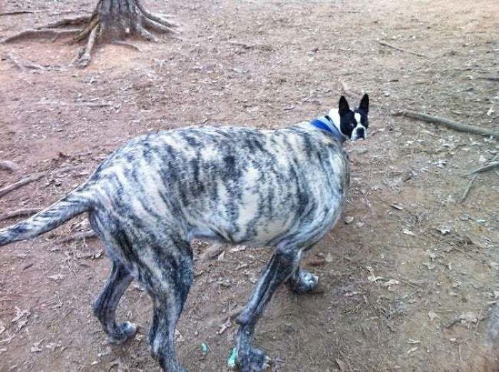 W sieci pojawiło się zatrważające zdjęcie psa. Ludzie są zdezorientowani