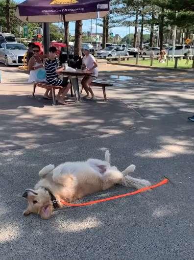 Sprytny psiak udaje nieżywego, żeby dłużej zostać w parku