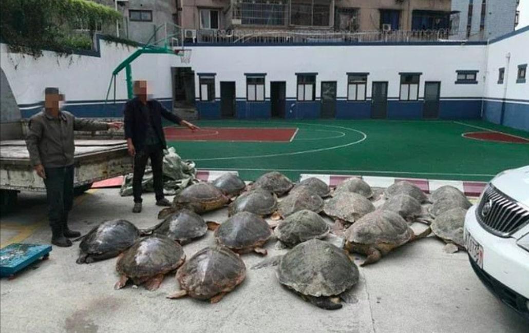 Policja zatrzymała podejrzaną ciężarówkę. W środku znajdowało się 107 zamrożonych żółwi