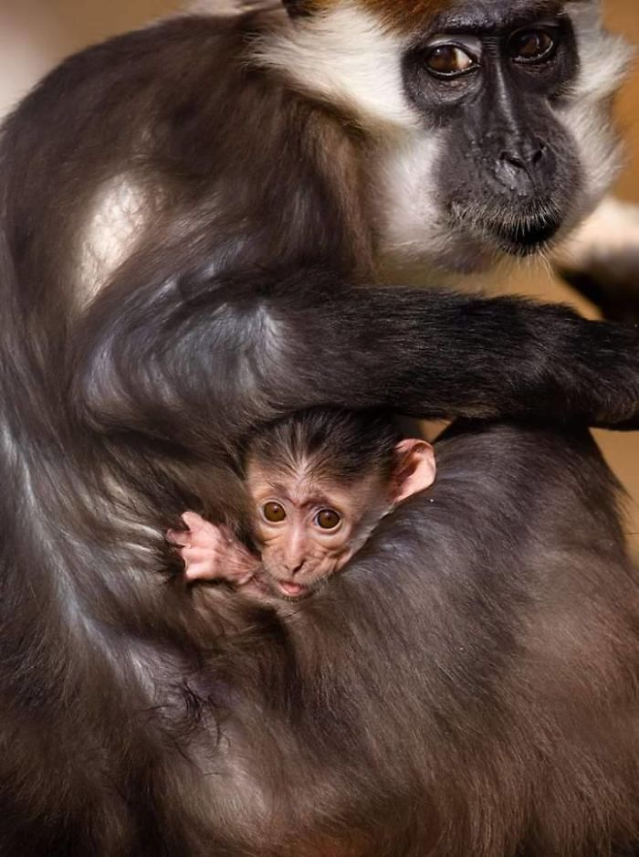 34 zdjęcia ukazujące miłość pomiędzy mamami i ich dziećmi