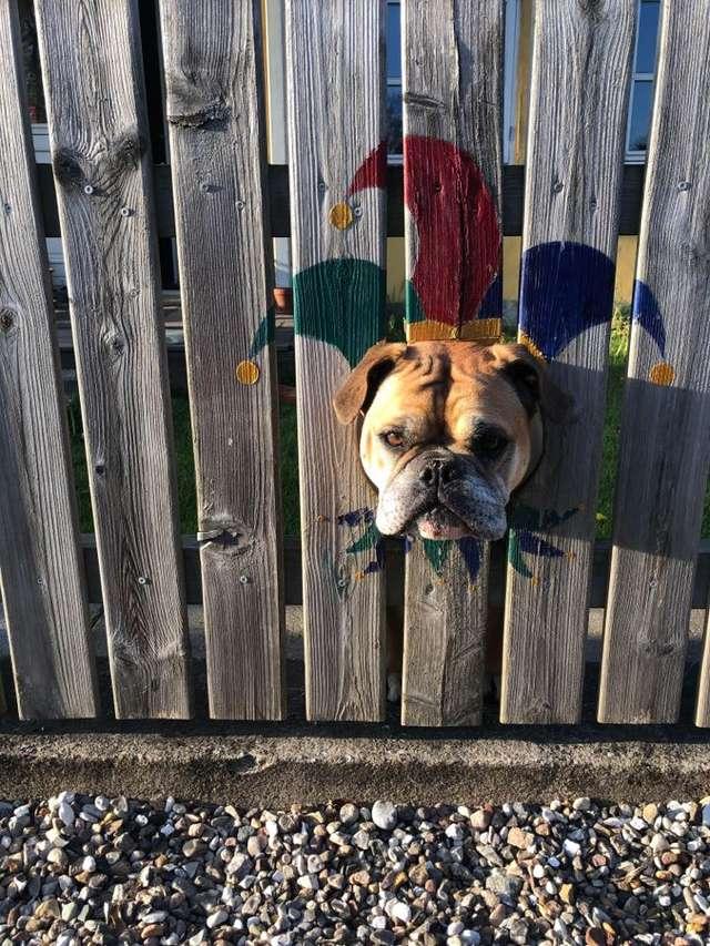 Ludzie nie mogą przejść obojętnie obok tego psa. Przez swoją wścibskość, stał się atrakcją