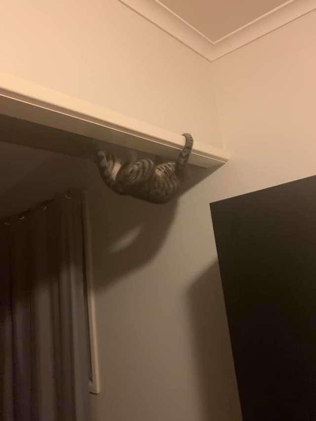 Była w szoku, gdy zobaczyła, że jej kotka zachowuje się zupełnie jak pająk