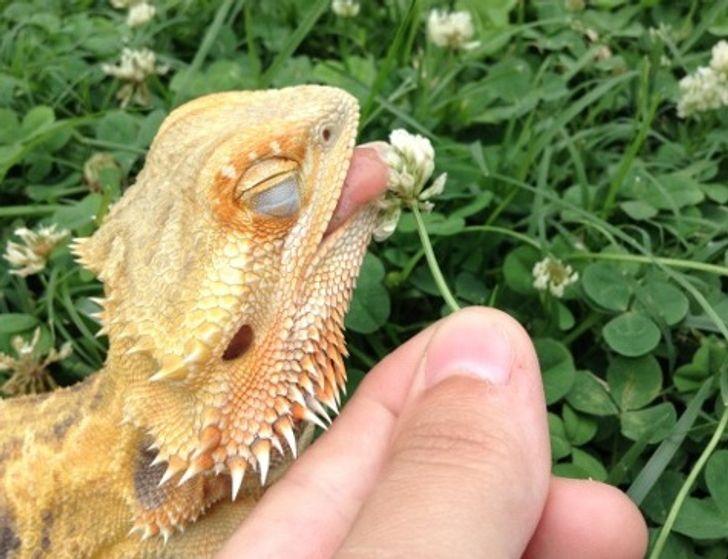 19 zwierzaków, które pokazują, że wcale nie trzeba być puszystym, aby być słodkim