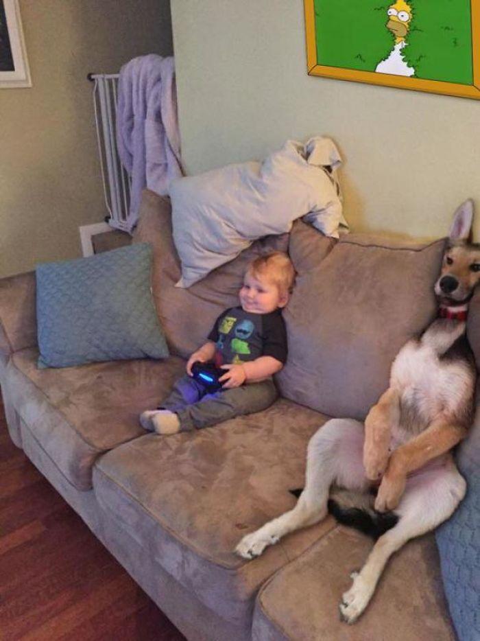 29 psów, które potrafią nieźle rozśmieszyć. Są mistrzami!
