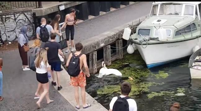 Próbował obronić łabędzie i zapłacił za to wysoką cenę. Zatrważający film z monitoringu