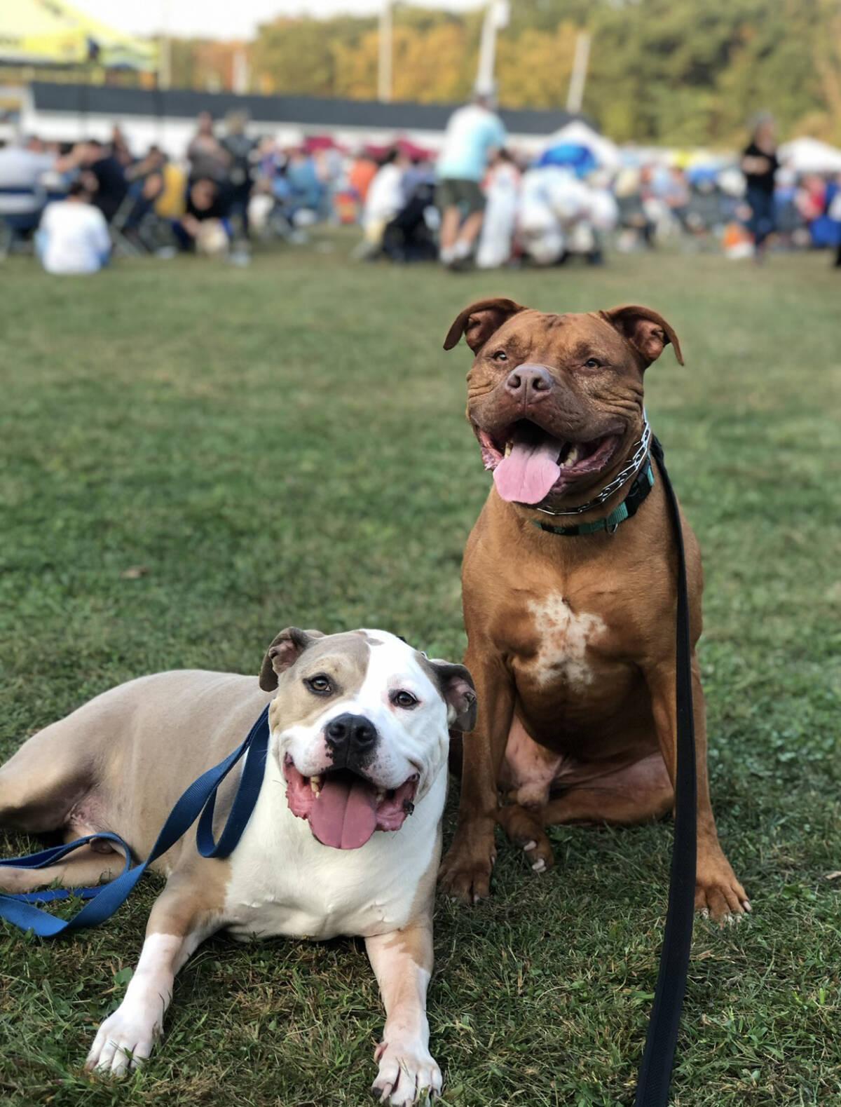 Ukryta kamera ujawniła, co zrobił pies ze swoim chorym bratem