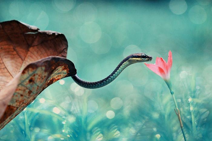 wąż i kwiatek