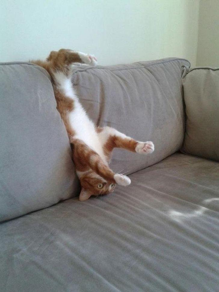 kot w kanapie