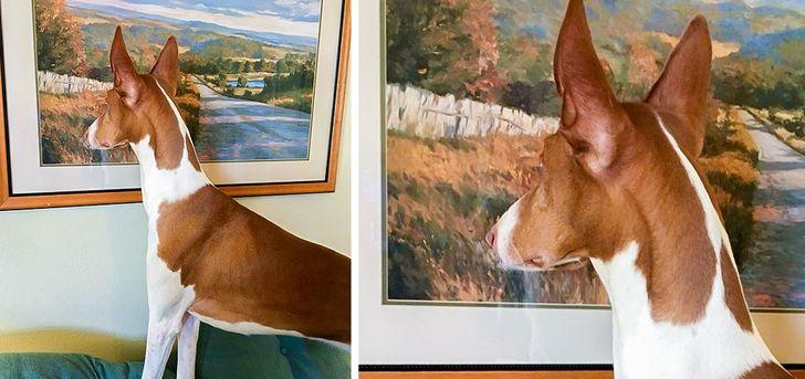 pies patrzy na obraz