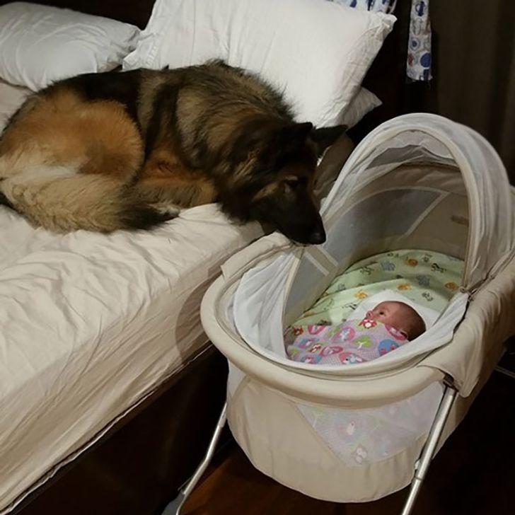 pies pilnuje noworodka