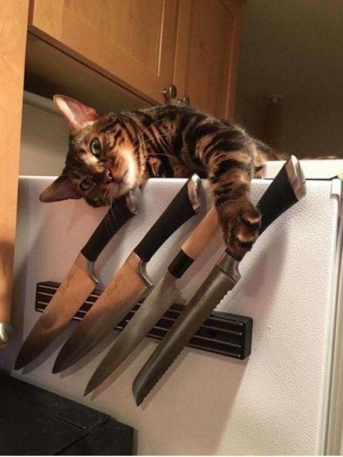 kot z nożem