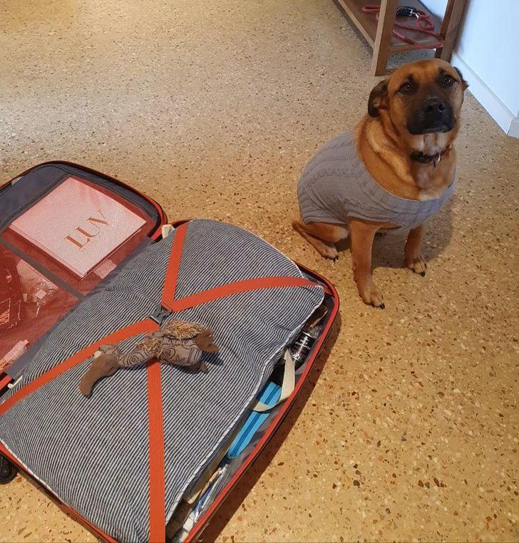 pies i walizka