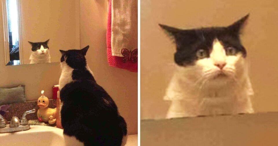 kot przed lustrem