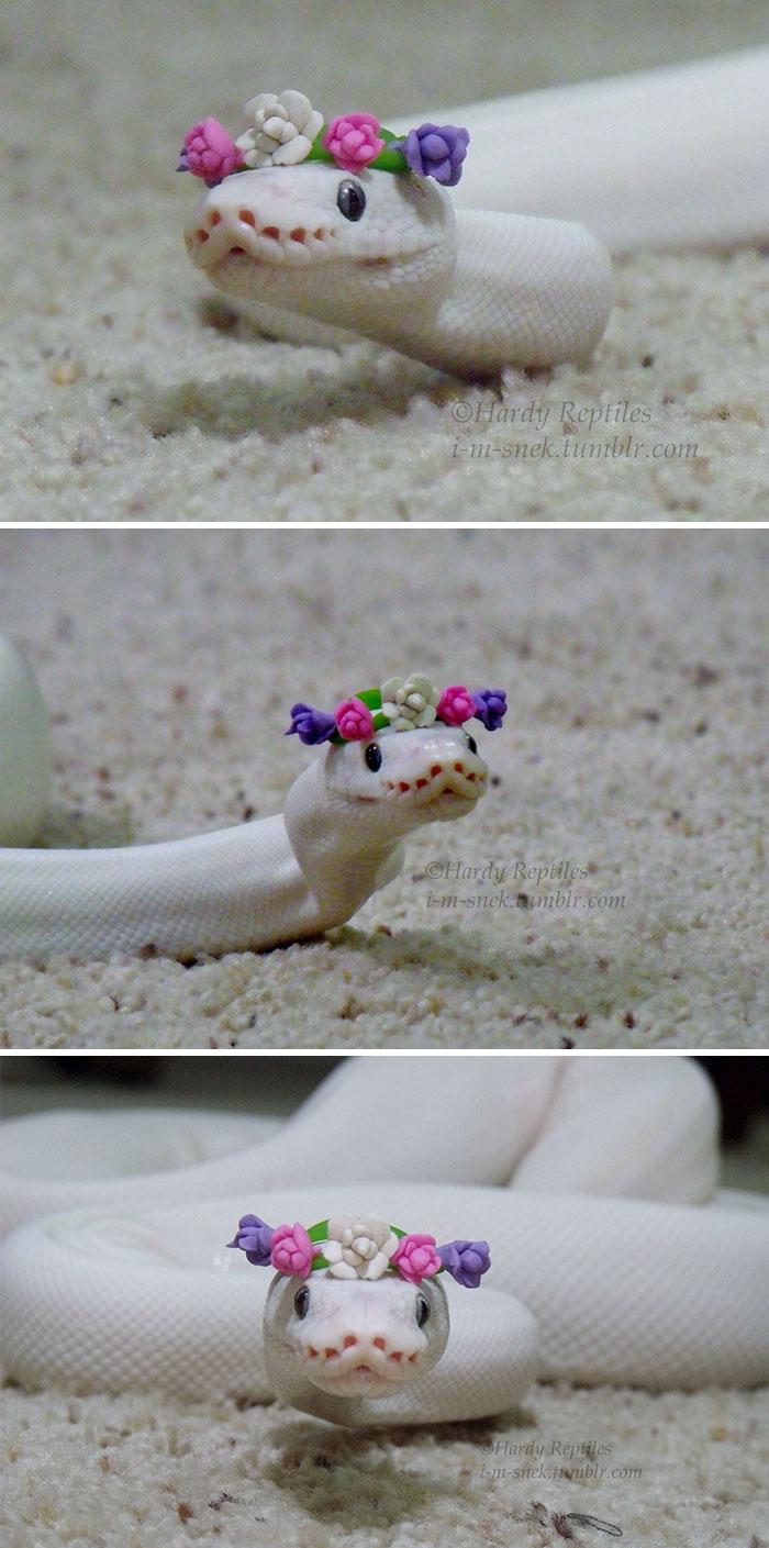 wąż w wianku