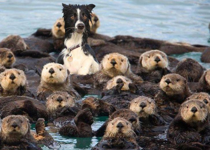pies z fokami