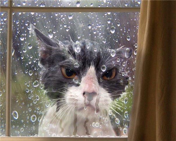 mokry kot