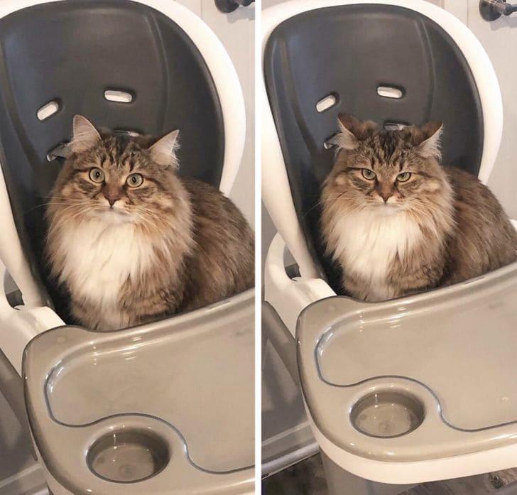 kot w foteliku