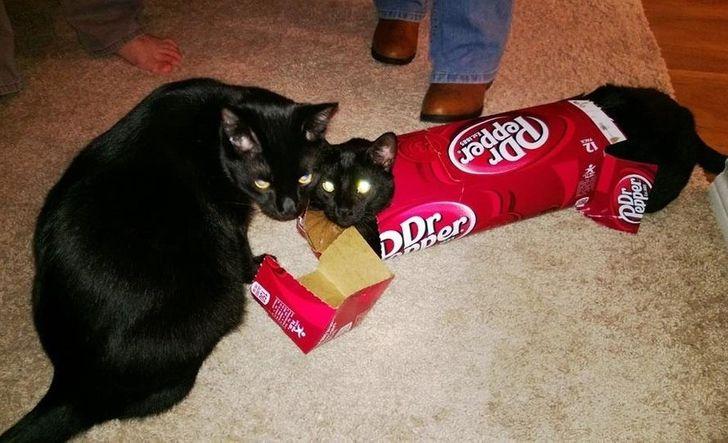 dwa koty i pudełko