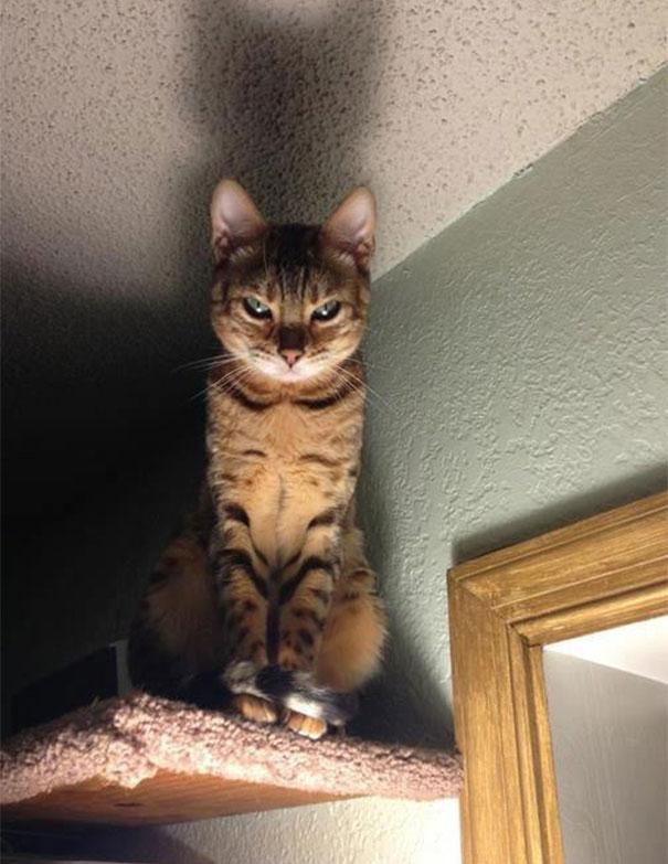 straszny kot