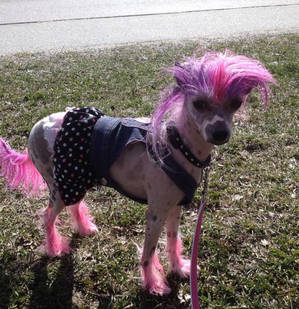 różowy pies