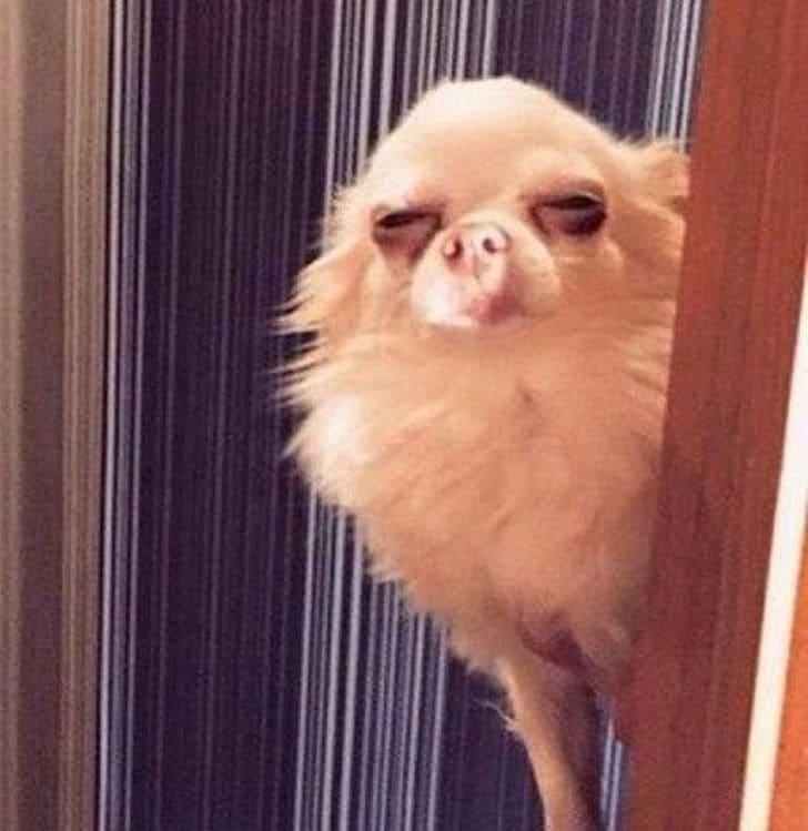 podejrzliwy pies