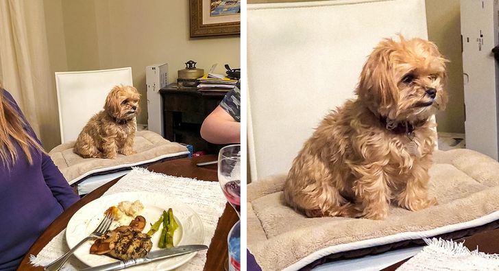 pies przy stole