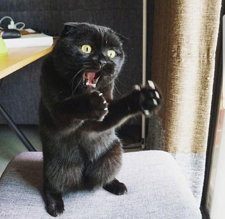 kot w szoku